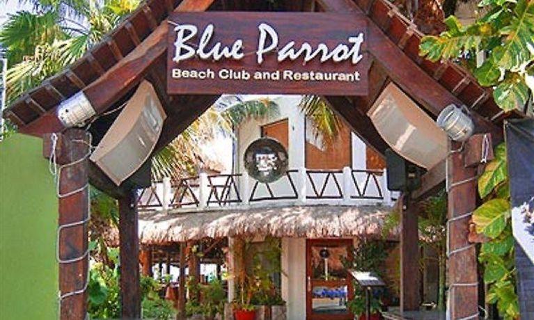 Blue Parrot Suites Playa Del Carmen: Playa Del Carmen Hotel